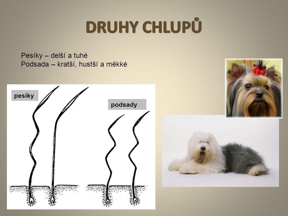http://www.selmy-ms.xf.cz/ http://www.google.cz/imgres?q=Canis+lupus+familiaris+FOTO&hl=cs&client=firefox- a&hs=dRN&sa=X&rls=org.mozilla:cs:official&biw=1280&bih=637&tbm=isch&tbnid=uzbCoKiU8QwhDM:&imgrefurl=http://www.ibibiobase.com/projects/p53/organism/canis- familiaris.htm&docid=c9HgTo0jDa0SEM&w=448&h=371&ei=F3s-Tr7rEMXGswbxmvnz http://www.google.cz/imgres?q=KOSTRA+PSA+FOTO&hl=cs&client=firefox-a&hs=E12&sa=X&rls=org.mozilla:cs:official&biw=1280&bih=637&tbm=isch&tbnid=i08sr38ZcD- pxM:&imgrefurl=http://ronny-rhodeskyridgeback.ic.cz/strana7.html&docid=Xb6CbtvzC20OTM&w=510&h=470&ei=yH4-Ts6cIMvDswbj68EI&zoom=1&iact=hc&vpx=185&vpy=169 http://www.google.cz/imgres?q=LEBKA+PSA+POPIS+FOTO&hl=cs&client=firefox- a&hs=RVi&sa=X&rls=org.mozilla:cs:official&biw=1280&bih=637&tbm=isch&prmd=ivns&tbnid=QrHhFAgQk-o5XM:&imgrefurl=http://eshop.merci.cz/detail4741/zoologicke- modely/model-zoologicky-lebka-psa&docid=uXaZ6r_UHgGASM&w=800&h=542&ei=HYE-Tv- ZLsbHsgaHmbjpAg&zoom=1&iact=hc&vpx=785&vpy=105&dur=427&hovh=185&hovw=273&tx=132&ty=128&page=1&tbnh=153&tbnw=194&start=0&ndsp=18&ved=1t:429,r:4,s:0 http://www.google.cz/imgres?q=paw+dog+foto&hl=cs&client=firefox- a&hs=YR3&sa=X&rls=org.mozilla:cs:official&biw=1280&bih=637&tbm=isch&tbnid=uzkpeLIexWrkNM:&imgrefurl=http://www.orvis.com/store/product.aspx%253Fpf_id%253D0X6X&doci d=7sCzJNq59uJwvM&w=356&h=3 http://www.google.cz/imgres?q=paw+dog+foto&hl=cs&client=firefox- a&hs=YR3&sa=X&rls=org.mozilla:cs:official&biw=1280&bih=637&tbm=isch&tbnid=cV13p0ey75mv0M:&imgrefurl=http://fantasystock.deviantart.com/art/Puppy-Anatomy-Dog-Paw- 50689147&docid=nAUC3-tcP95LWM&w=1944&h=2592&ei=FoU-TtraO4rBswaN8aAI&zoom=1&iact=hc&vpx=788&vpy=240&dur=798&hovh=259&hovw=194&tx=105 http://www.google.cz/imgres?q=paw+dog+foto&hl=cs&client=firefox- a&hs=qli&sa=X&rls=org.mozilla:cs:official&biw=1280&bih=637&tbm=isch&prmd=ivns&tbnid=LaE3z_aVzfcgDM:&imgrefurl=http://blogs.discovery.com/daily_treat/2009/05/pet- pawticures-sit-pick-colo http://www.google.cz/imgres?q=head+dog+f