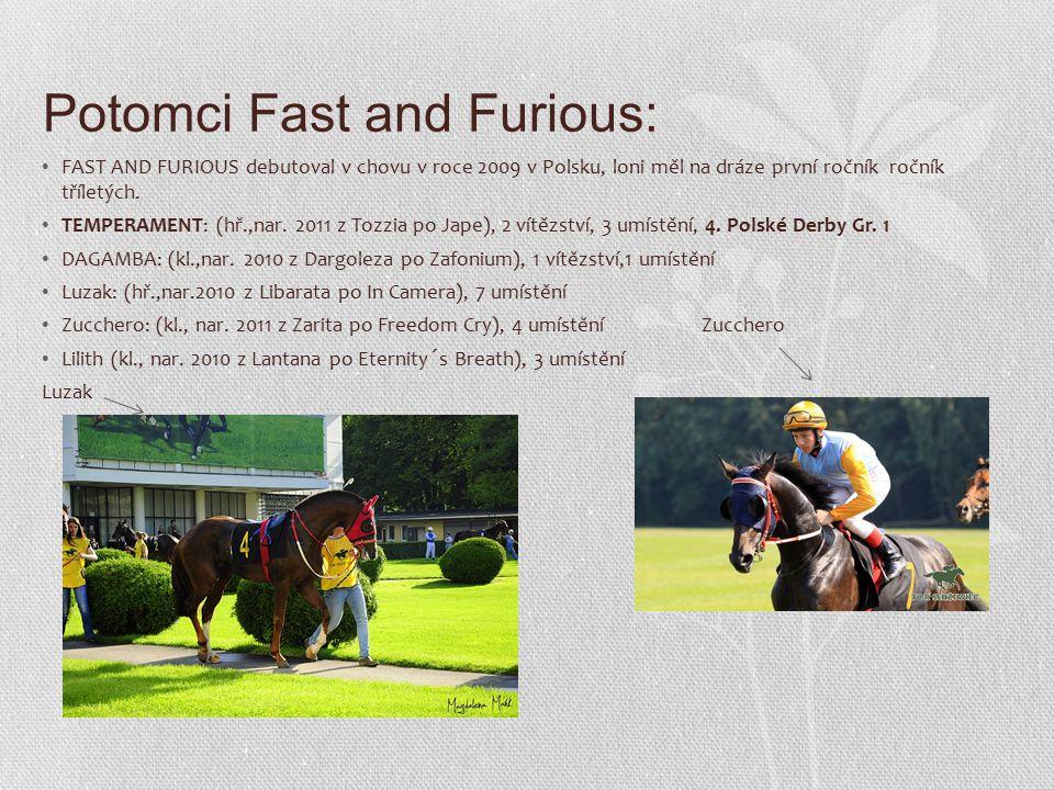 Potomci Fast and Furious: FAST AND FURIOUS debutoval v chovu v roce 2009 v Polsku, loni měl na dráze první ročník ročník tříletých.