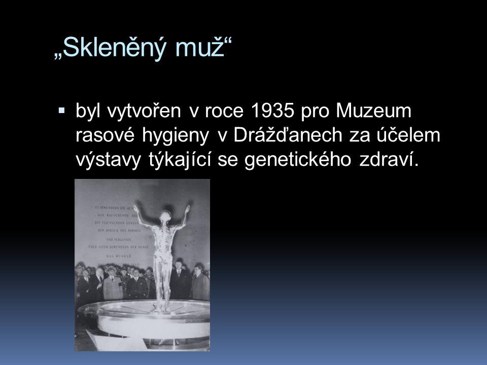 """""""Skleněný muž""""  byl vytvořen v roce 1935 pro Muzeum rasové hygieny v Drážďanech za účelem výstavy týkající se genetického zdraví."""