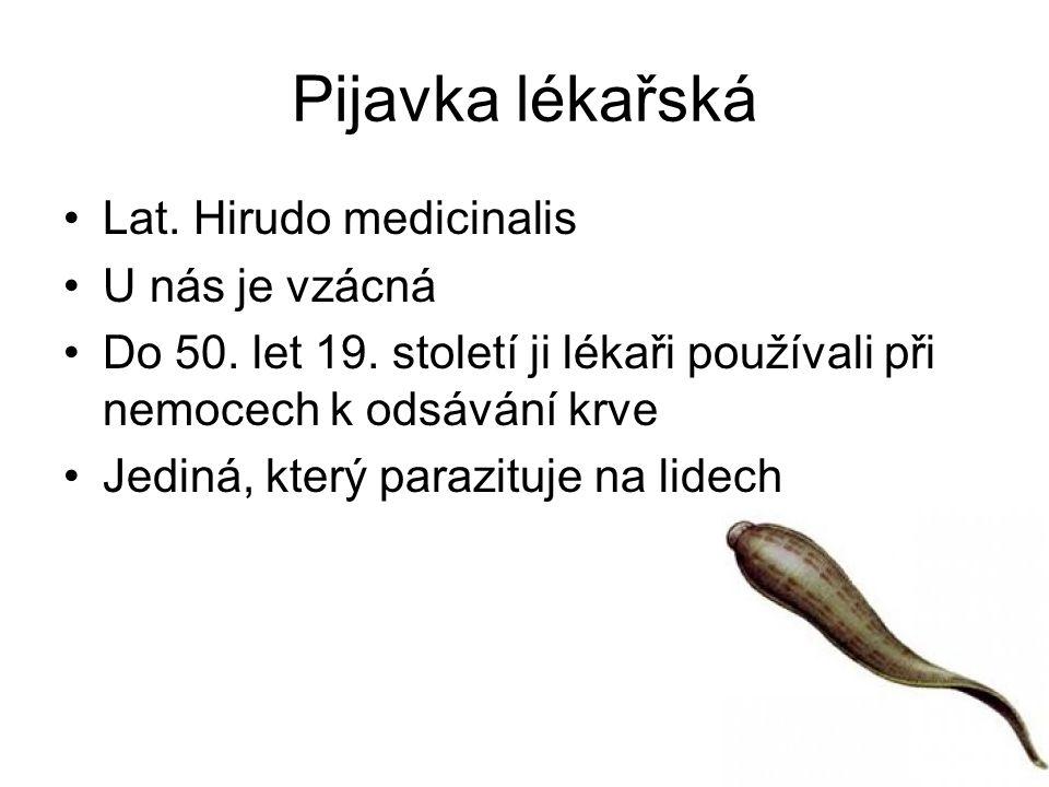 Pijavka lékařská Lat. Hirudo medicinalis U nás je vzácná Do 50. let 19. století ji lékaři používali při nemocech k odsávání krve Jediná, který parazit