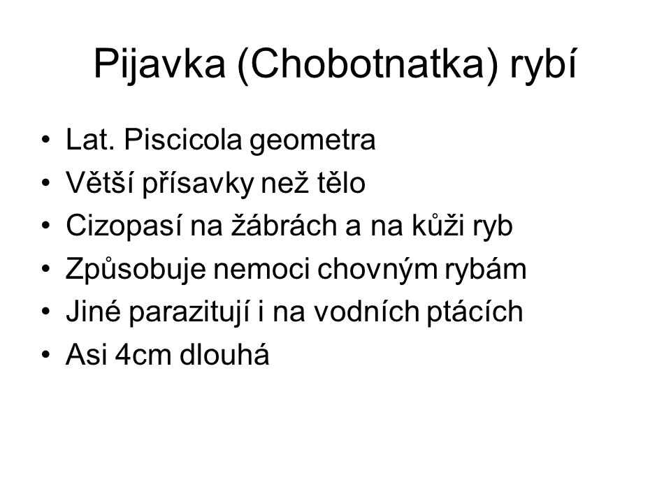 Pijavka (Chobotnatka) rybí Lat.