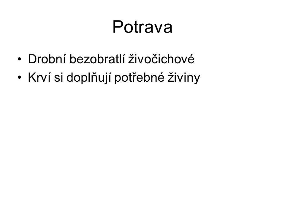 Zástupci Hltanovka bahenní Pijavka lékařská Chobotnatka rybí Pijavka koňská