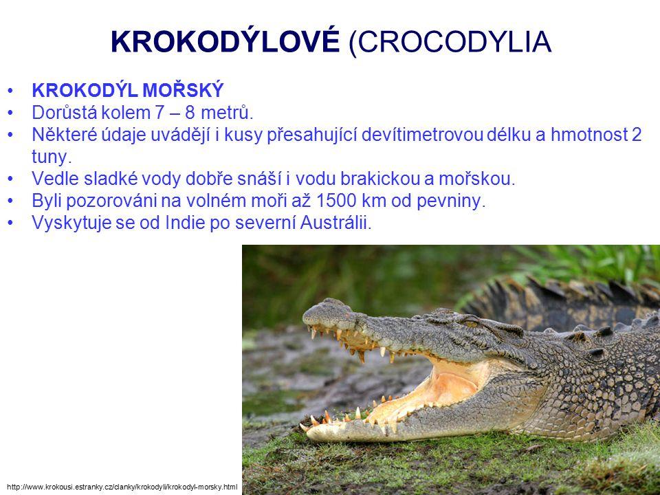 KROKODÝLOVÉ (CROCODYLIA http://relax.lidovky.cz/ulovili-obrovskeho-krokodyla-vazi-tunu-fd1-/zajimavosti.aspx?c=A110906_164758_ln-zajimavosti_mtr Krokodýl mořský ulovený na Filipínách v roce 2011 pro podezření z útoků na dobytek a lidi.