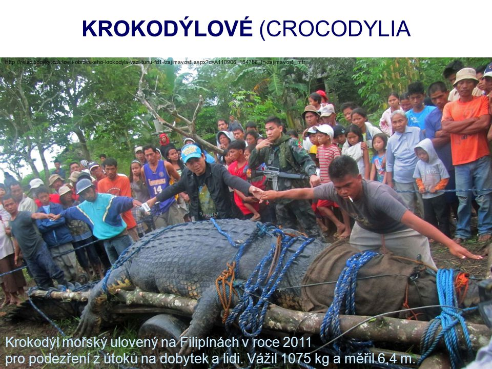 KROKODÝLOVÉ (CROCODYLIA http://relax.lidovky.cz/ulovili-obrovskeho-krokodyla-vazi-tunu-fd1-/zajimavosti.aspx c=A110906_164758_ln-zajimavosti_mtr Krokodýl mořský ulovený na Filipínách v roce 2011 pro podezření z útoků na dobytek a lidi.