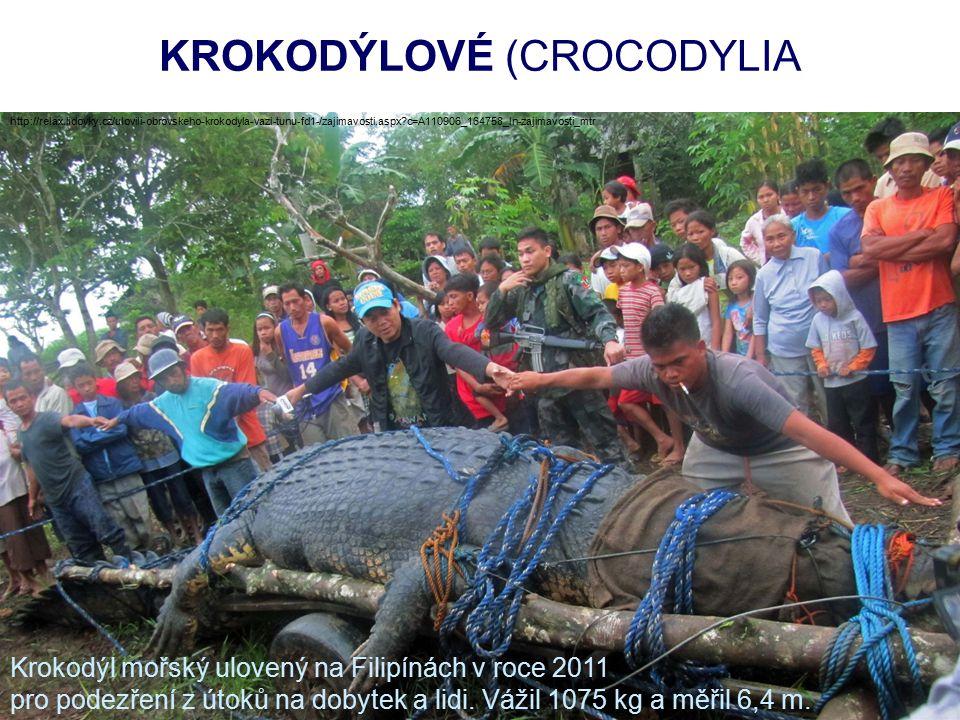 KROKODÝLOVÉ (CROCODYLIA http://relax.lidovky.cz/ulovili-obrovskeho-krokodyla-vazi-tunu-fd1-/zajimavosti.aspx?c=A110906_164758_ln-zajimavosti_mtr Kroko