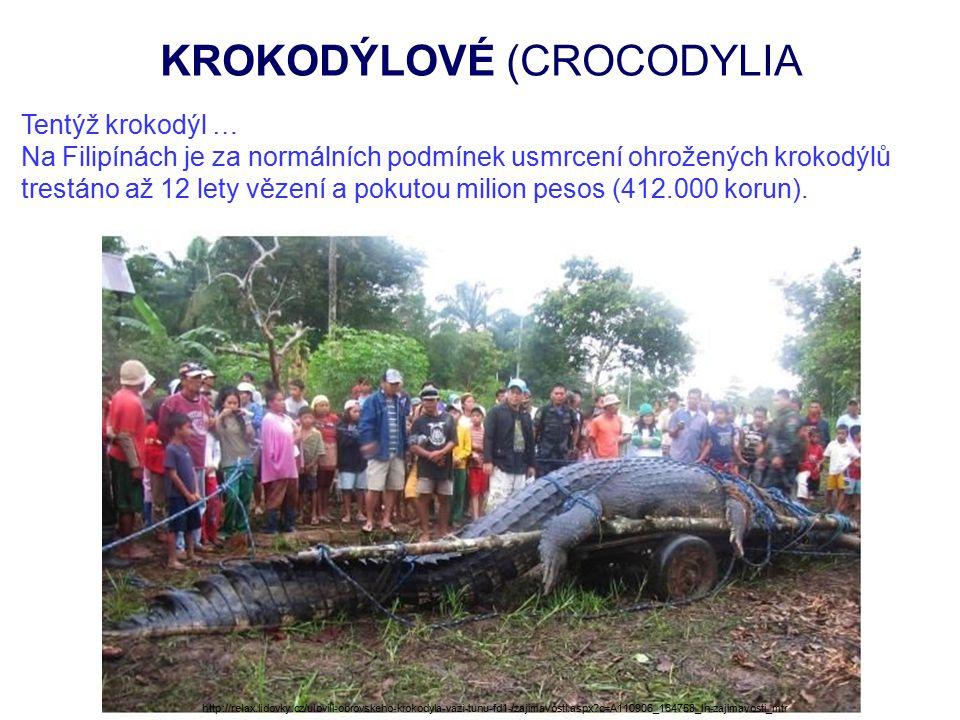 KROKODÝLOVÉ (CROCODYLIA Tentýž krokodýl … Na Filipínách je za normálních podmínek usmrcení ohrožených krokodýlů trestáno až 12 lety vězení a pokutou milion pesos (412.000 korun).