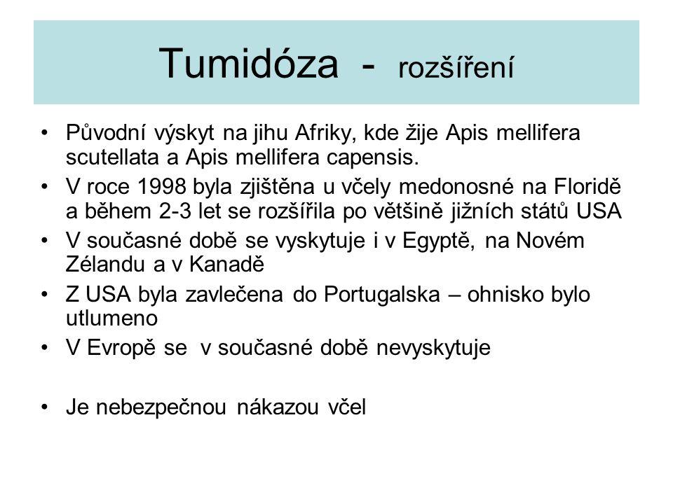 Tumidóza - rozšíření Původní výskyt na jihu Afriky, kde žije Apis mellifera scutellata a Apis mellifera capensis. V roce 1998 byla zjištěna u včely me