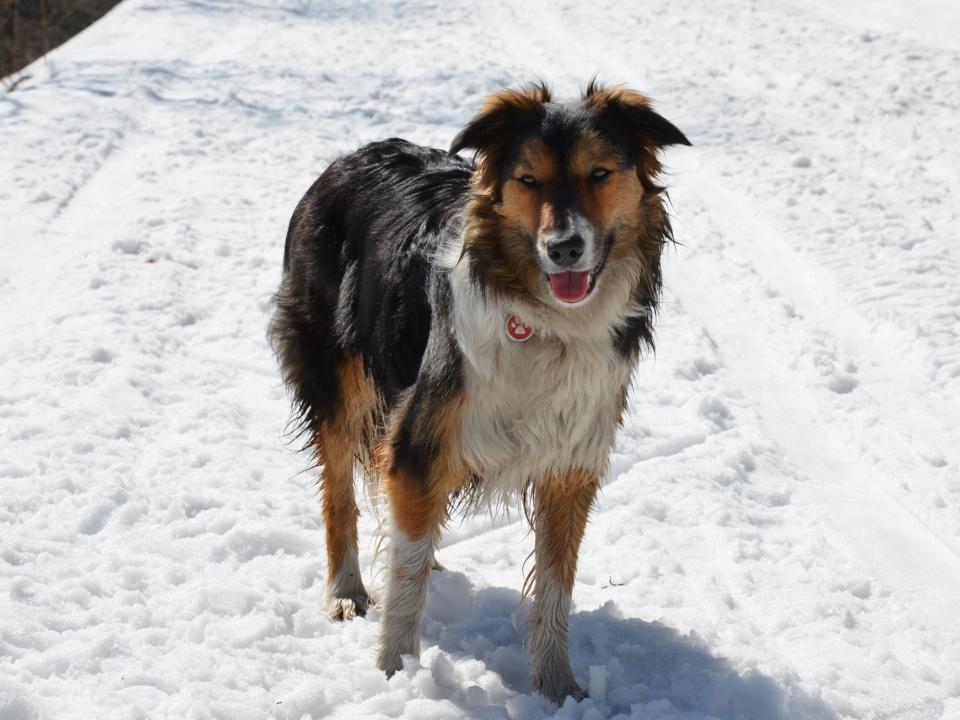 Válení ve sněhu miluje
