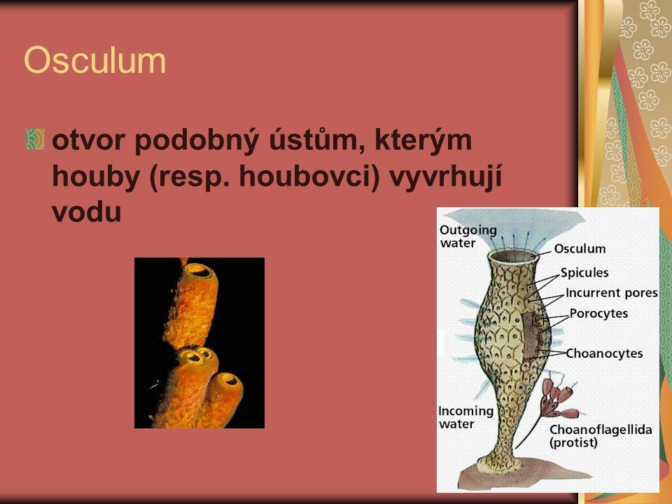 Ostium otvor do těla hub, kterým se nasává voda