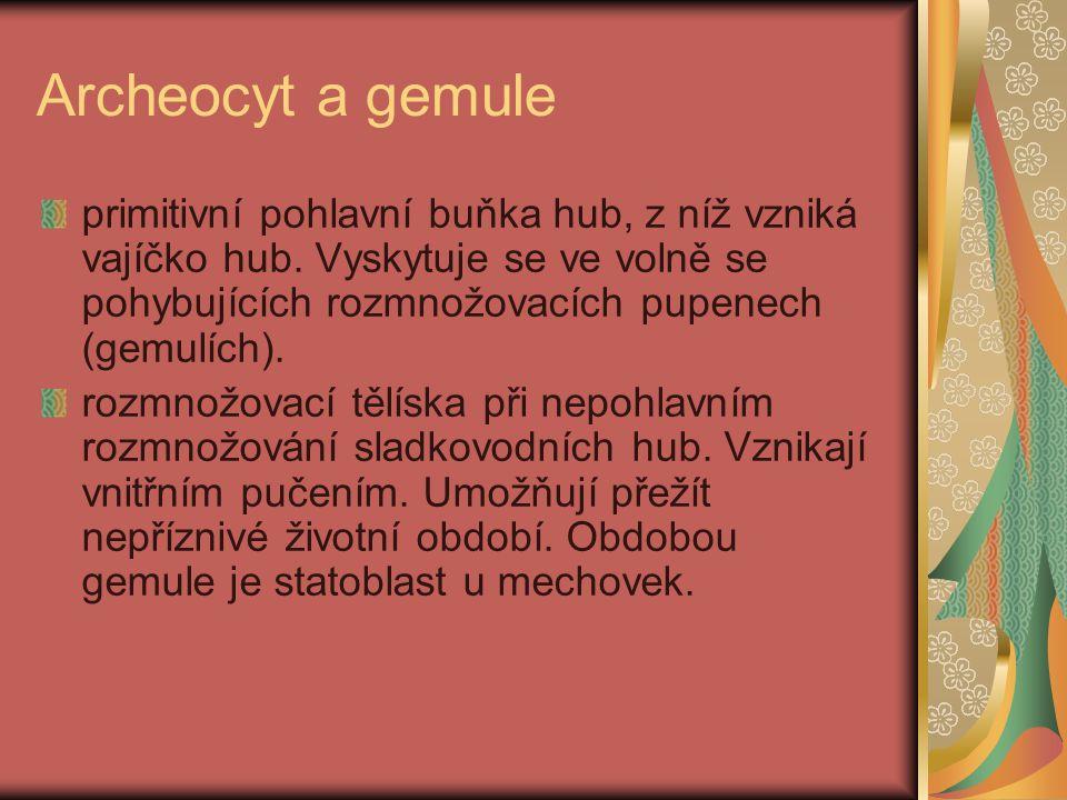 Archeocyt a gemule primitivní pohlavní buňka hub, z níž vzniká vajíčko hub. Vyskytuje se ve volně se pohybujících rozmnožovacích pupenech (gemulích).
