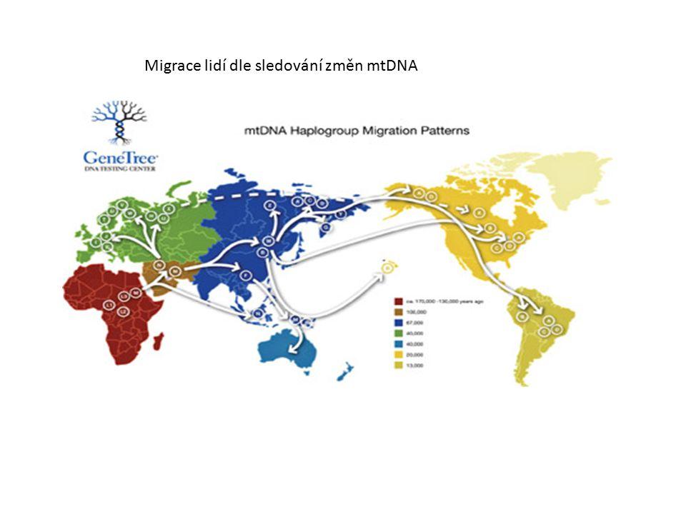 Migrace lidí dle sledování změn mtDNA