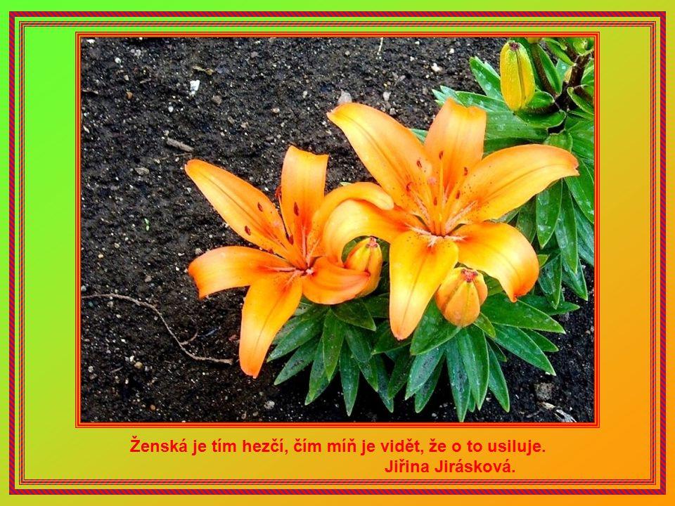 S pravdou a láskou nad všelikou cháskou zvítězit snadné není. Ivo Jahelka.