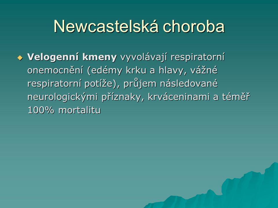 Newcastelská choroba  Velogenní kmeny vyvolávají respiratorní onemocnění (edémy krku a hlavy, vážné respiratorní potíže), průjem následované neurolog