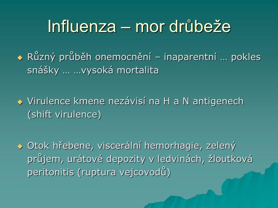 Influenza – mor drůbeže  Různý průběh onemocnění – inaparentní … pokles snášky … …vysoká mortalita  Virulence kmene nezávisí na H a N antigenech (sh