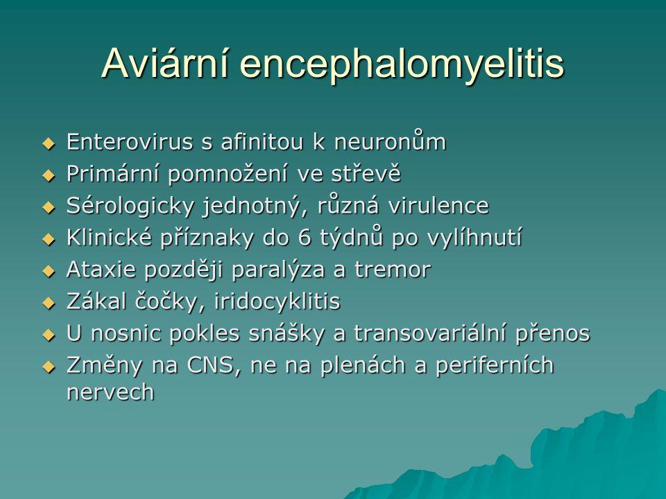 Aviární encephalomyelitis  Enterovirus s afinitou k neuronům  Primární pomnožení ve střevě  Sérologicky jednotný, různá virulence  Klinické přízna