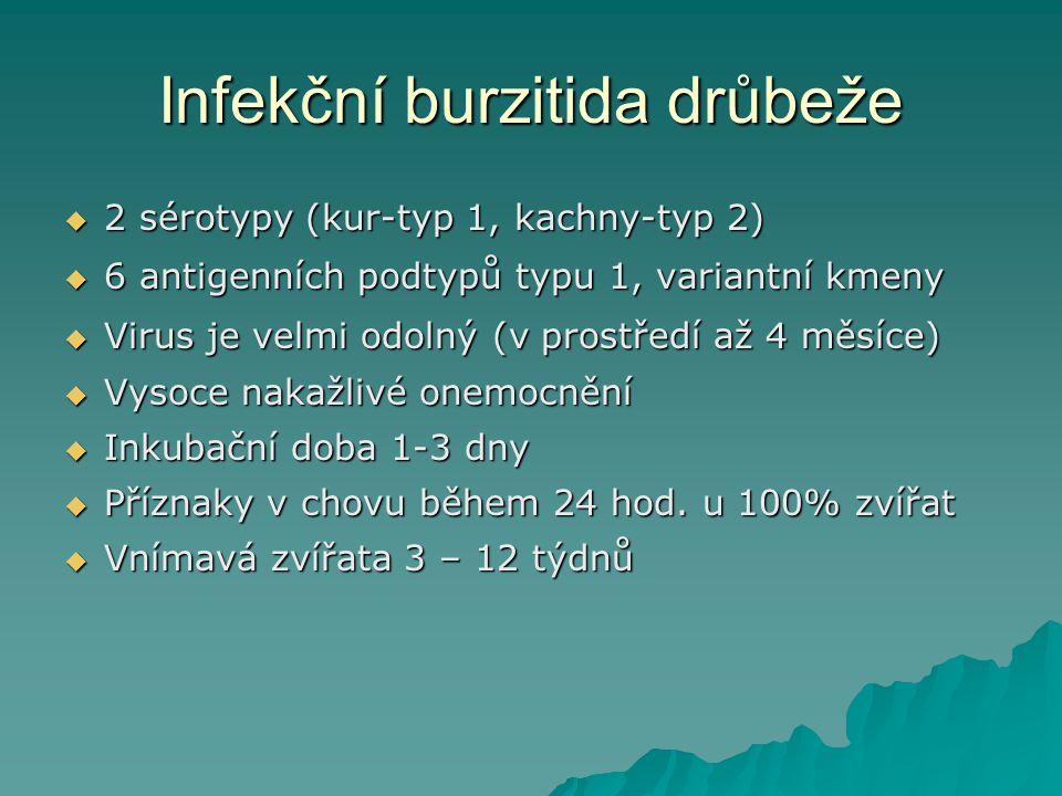 Infekční burzitida drůbeže  2 sérotypy (kur-typ 1, kachny-typ 2)  6 antigenních podtypů typu 1, variantní kmeny  Virus je velmi odolný (v prostředí