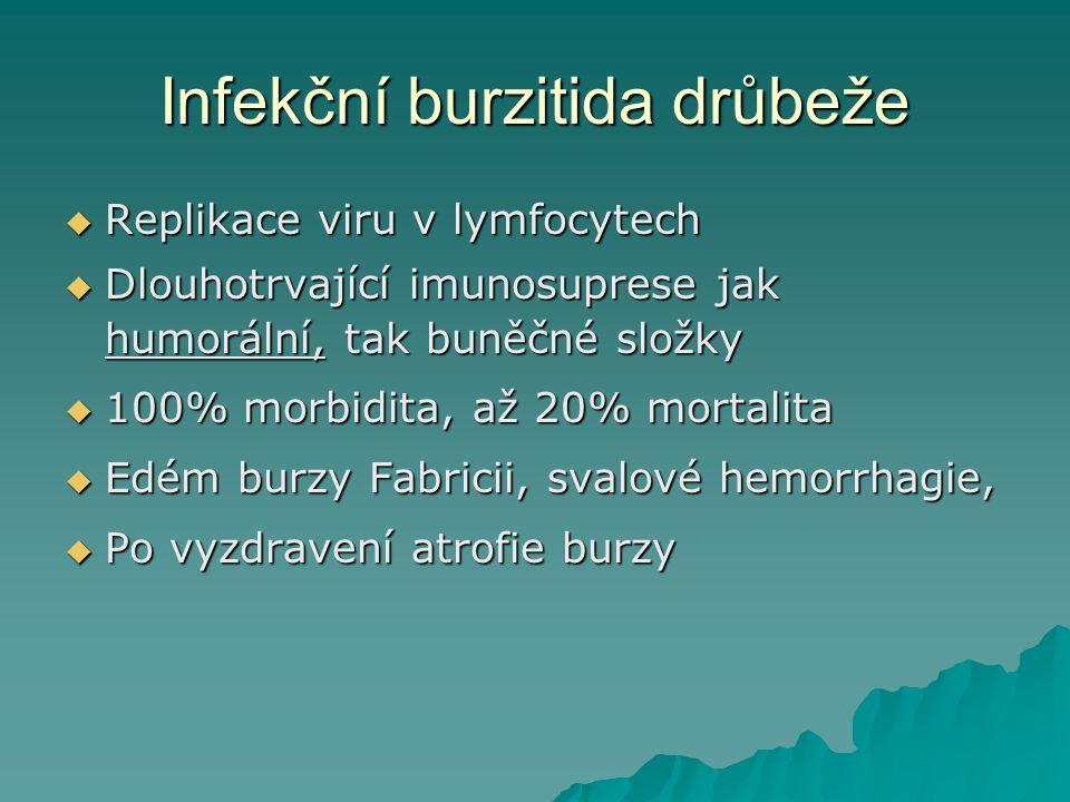 Infekční burzitida drůbeže  Replikace viru v lymfocytech  Dlouhotrvající imunosuprese jak humorální, tak buněčné složky  100% morbidita, až 20% mor