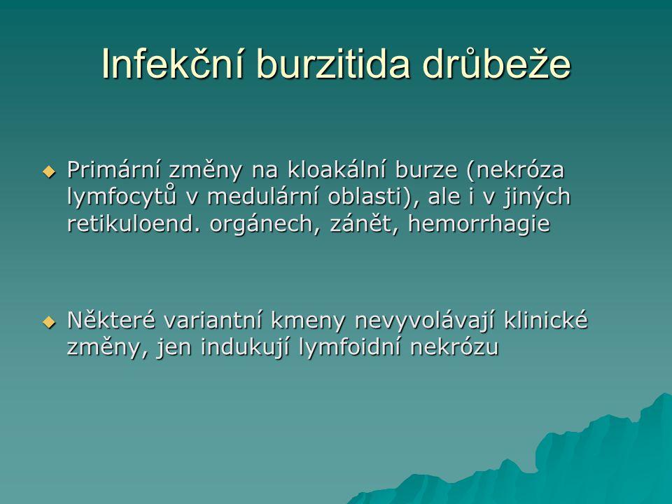 Infekční burzitida drůbeže  Primární změny na kloakální burze (nekróza lymfocytů v medulární oblasti), ale i v jiných retikuloend. orgánech, zánět, h