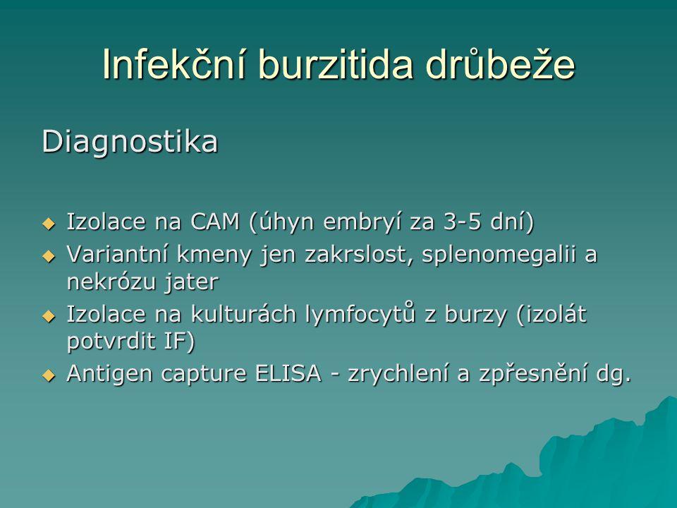 Infekční burzitida drůbeže Diagnostika  Izolace na CAM (úhyn embryí za 3-5 dní)  Variantní kmeny jen zakrslost, splenomegalii a nekrózu jater  Izol
