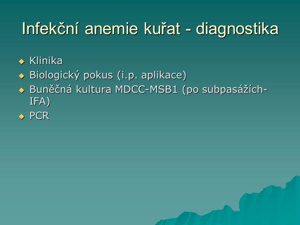 Infekční anemie kuřat - diagnostika  Klinika  Biologický pokus (i.p. aplikace)  Buněčná kultura MDCC-MSB1 (po subpasážích- IFA)  PCR