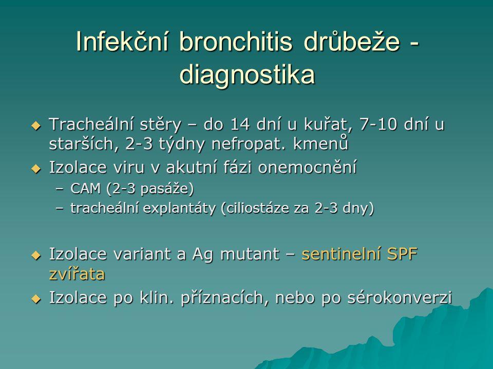 Infekční bronchitis drůbeže - diagnostika  Tracheální stěry – do 14 dní u kuřat, 7-10 dní u starších, 2-3 týdny nefropat. kmenů  Izolace viru v akut