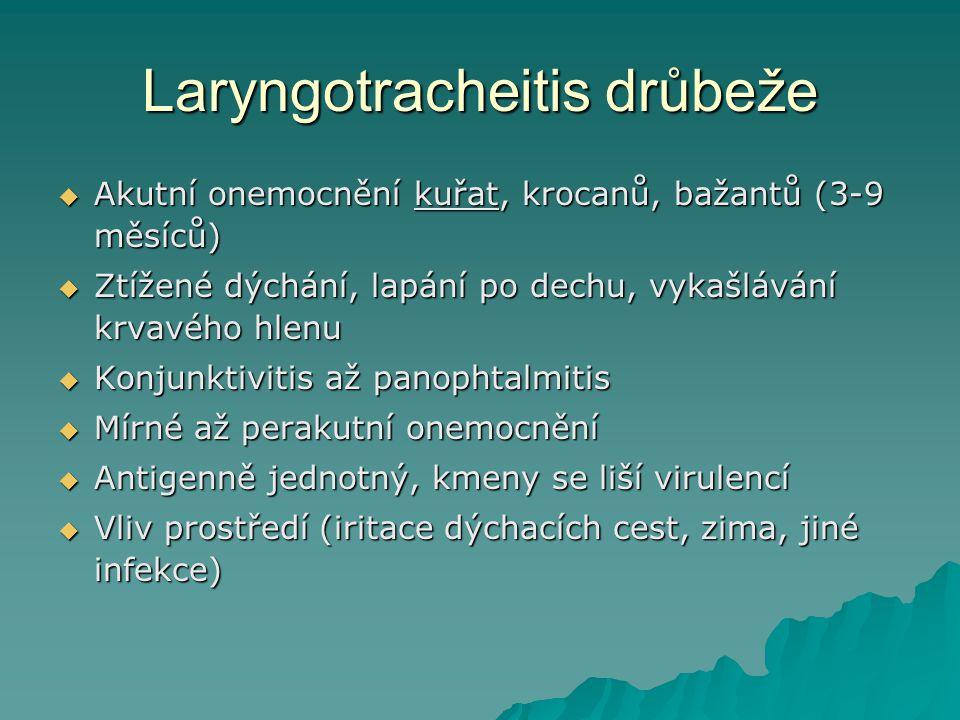 Laryngotracheitis drůbeže  Akutní onemocnění kuřat, krocanů, bažantů (3-9 měsíců)  Ztížené dýchání, lapání po dechu, vykašlávání krvavého hlenu  Ko