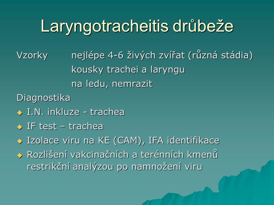 Laryngotracheitis drůbeže Vzorky nejlépe 4-6 živých zvířat (různá stádia) kousky trachei a laryngu kousky trachei a laryngu na ledu, nemrazit Diagnost