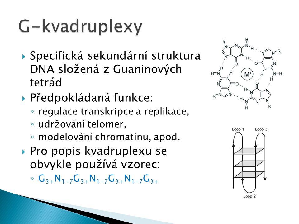  Specifická sekundární struktura DNA složená z Guaninových tetrád  Předpokládaná funkce: ◦ regulace transkripce a replikace, ◦ udržování telomer, ◦