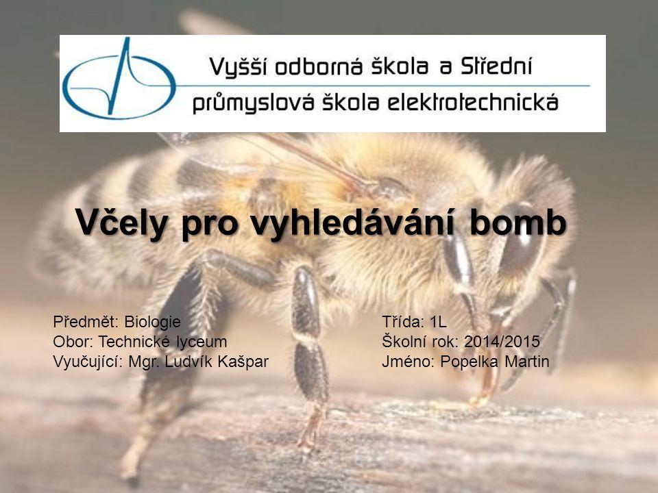 Včely pro vyhledávání bomb Předmět: BiologieTřída: 1L Obor: Technické lyceumŠkolní rok: 2014/2015 Vyučující: Mgr. Ludvík KašparJméno: Popelka Martin