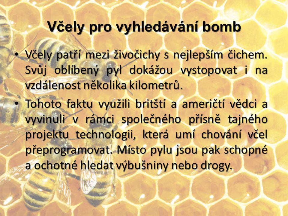 Včely pro vyhledávání bomb Po několika měsíčních testech vědci potvrdili, že včely opravdu umí čichem vyhledat jakékoliv výbušniny (od podomácku vyrobených náloží z hnojiva až po nášlapné miny, C-4 nebo Semtex.