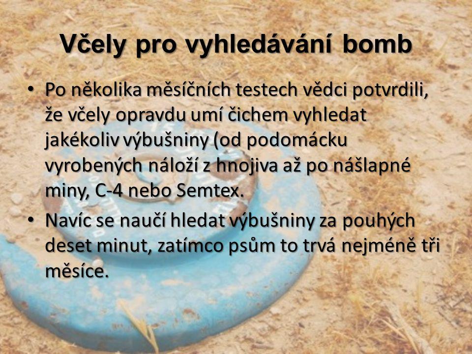 Včely pro vyhledávání bomb Po několika měsíčních testech vědci potvrdili, že včely opravdu umí čichem vyhledat jakékoliv výbušniny (od podomácku vyrob