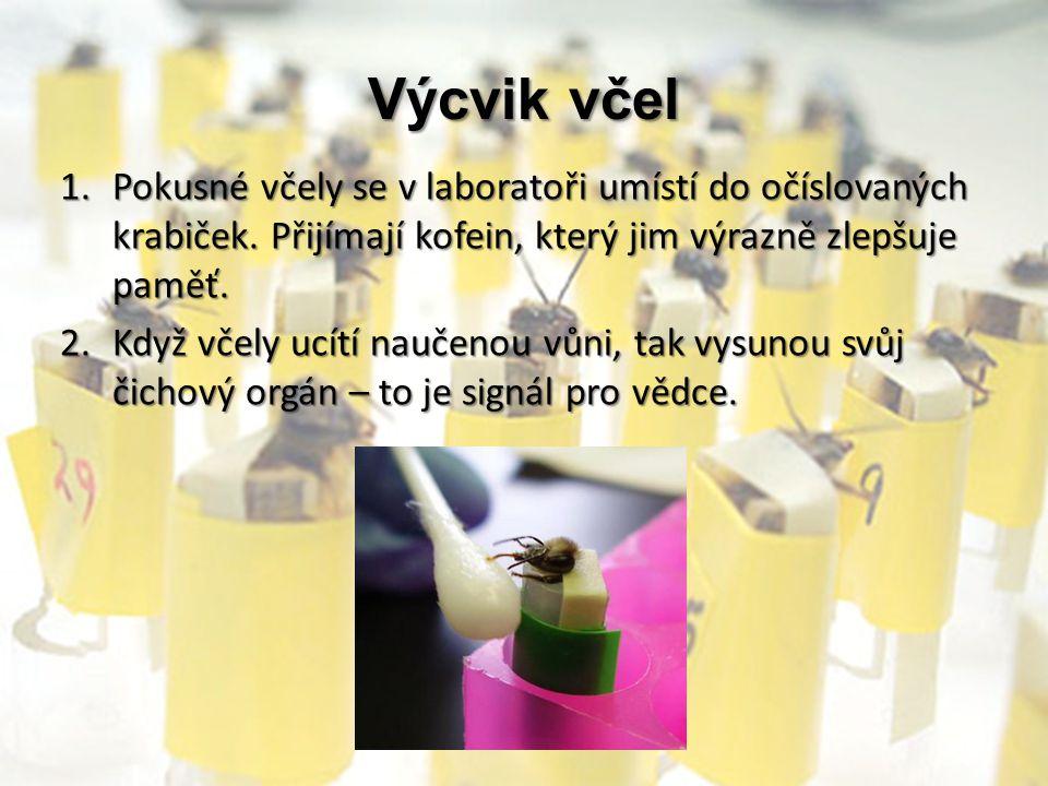 Výcvik včel 1.Pokusné včely se v laboratoři umístí do očíslovaných krabiček. Přijímají kofein, který jim výrazně zlepšuje paměť. 2.Když včely ucítí na
