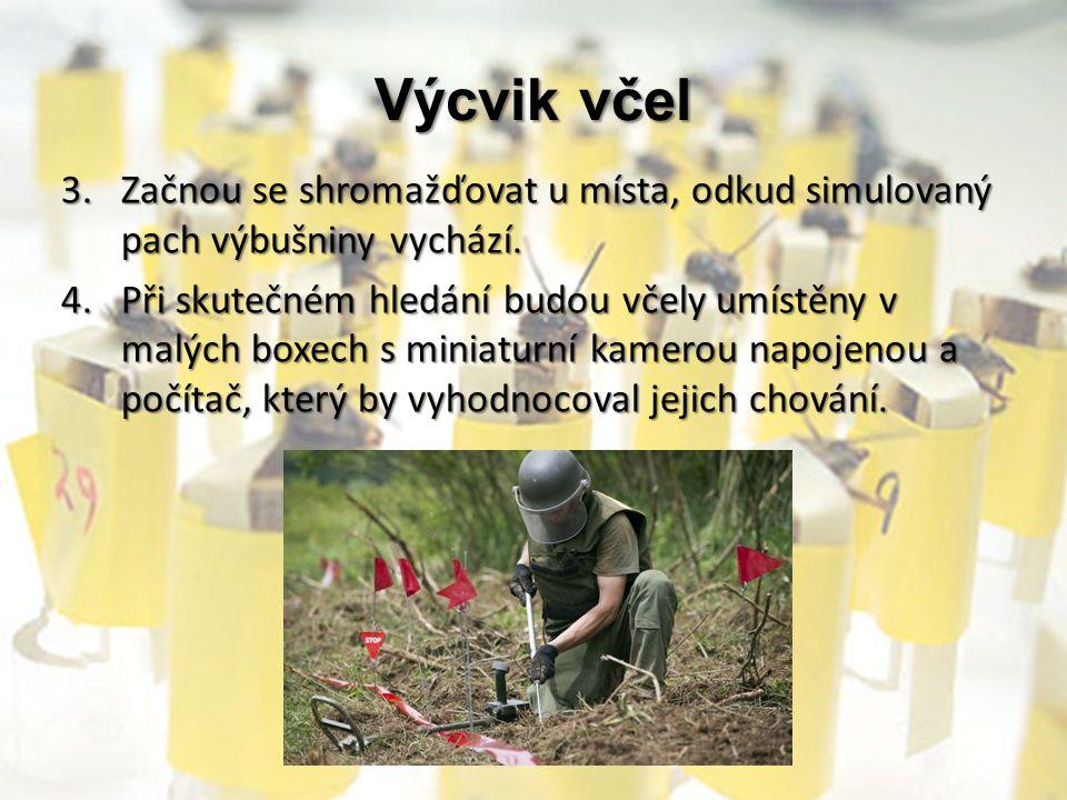 Výcvik včel 3.Začnou se shromažďovat u místa, odkud simulovaný pach výbušniny vychází. 4.Při skutečném hledání budou včely umístěny v malých boxech s