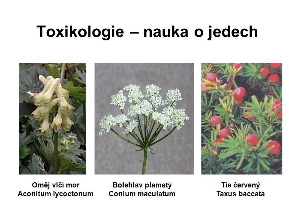 Toxikologie – nauka o jedech Oměj vlčí mor Aconitum lycoctonum Bolehlav plamatý Conium maculatum Tis červený Taxus baccata