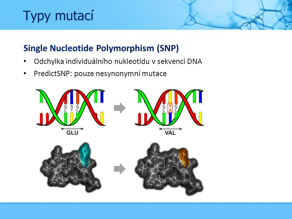 Typy mutací Single Nucleotide Polymorphism (SNP) Odchylka individuálního nukleotidu v sekvenci DNA PredictSNP: pouze nesynonymní mutace