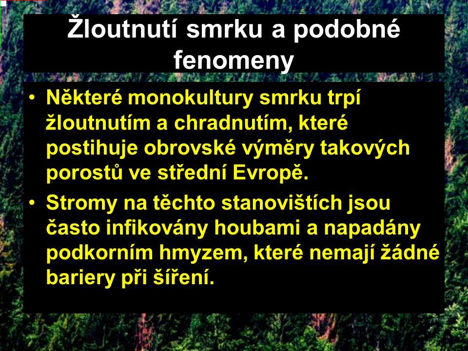 Žloutnutí smrku a podobné fenomeny Některé monokultury smrku trpí žloutnutím a chradnutím, které postihuje obrovské výměry takových porostů ve střední Evropě.