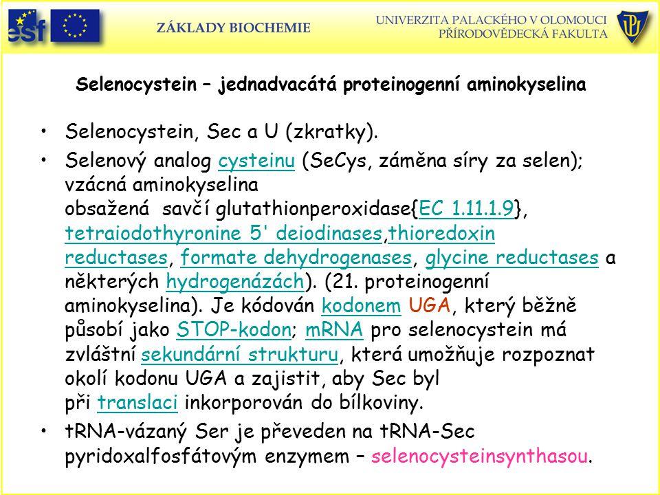 Selenocystein – jednadvacátá proteinogenní aminokyselina Selenocystein, Sec a U (zkratky). Selenový analog cysteinu (SeCys, záměna síry za selen); vzá