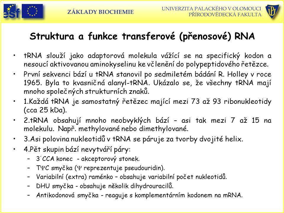 Struktura a funkce transferové (přenosové) RNA tRNA slouží jako adaptorová molekula vážící se na specifický kodon a nesoucí aktivovanou aminokyselinu