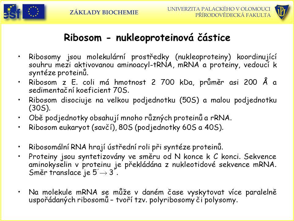 Ribosom - nukleoproteinová částice Ribosomy jsou molekulární prostředky (nukleoproteiny) koordinující souhru mezi aktivovanou aminoacyl-tRNA, mRNA a p