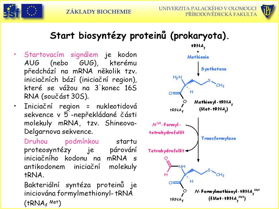 Start biosyntézy proteinů (prokaryota). Startovacím signálem je kodon AUG (nebo GUG), kterému předchází na mRNA několik tzv. iniciačních bází (iniciač