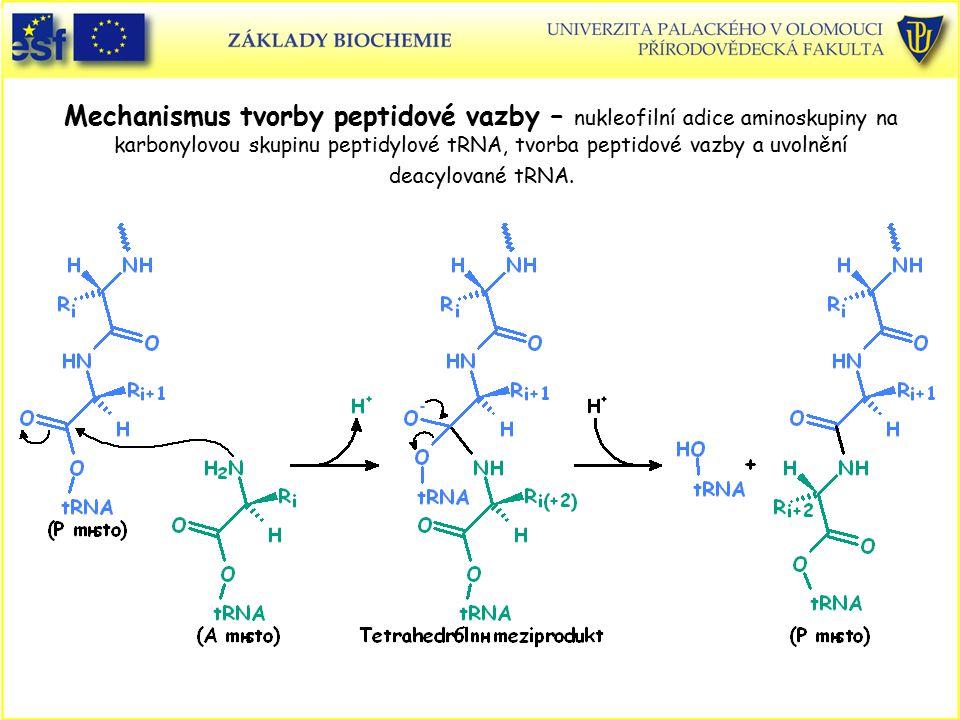 Mechanismus tvorby peptidové vazby – nukleofilní adice aminoskupiny na karbonylovou skupinu peptidylové tRNA, tvorba peptidové vazby a uvolnění deacyl