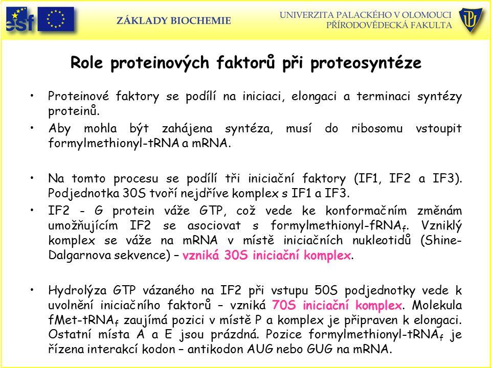 Role proteinových faktorů při proteosyntéze Proteinové faktory se podílí na iniciaci, elongaci a terminaci syntézy proteinů. Aby mohla být zahájena sy