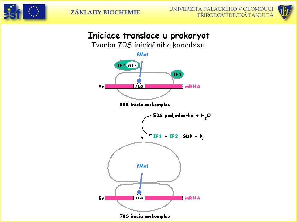 Iniciace translace u prokaryot Tvorba 70S iniciačního komplexu.