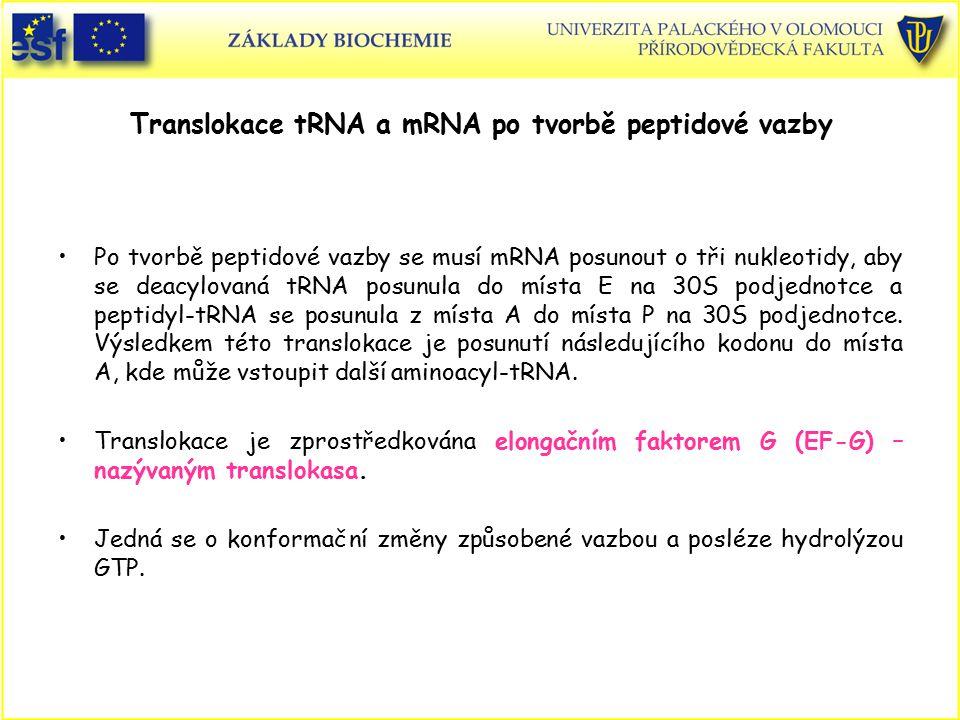 Translokace tRNA a mRNA po tvorbě peptidové vazby Po tvorbě peptidové vazby se musí mRNA posunout o tři nukleotidy, aby se deacylovaná tRNA posunula d