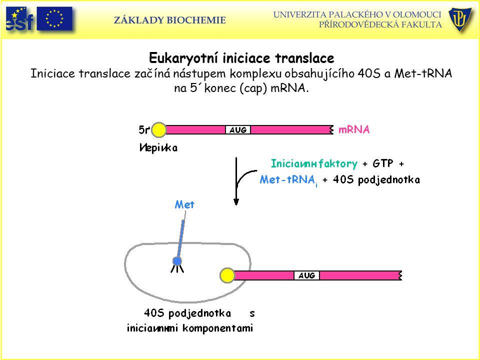 Eukaryotní iniciace translace Iniciace translace začíná nástupem komplexu obsahujícího 40S a Met-tRNA na 5´konec (cap) mRNA.