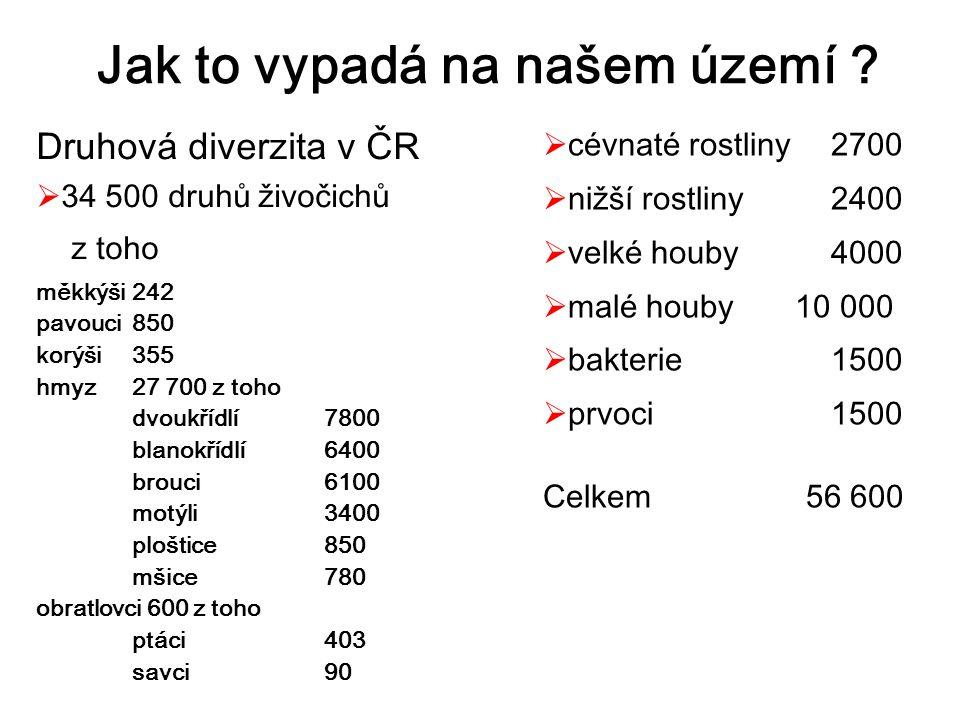 Druhová diverzita v ČR  34 500 druhů živočichů z toho měkkýši 242 pavouci 850 korýši 355 hmyz 27 700 z toho dvoukřídlí 7800 blanokřídlí 6400 brouci 6