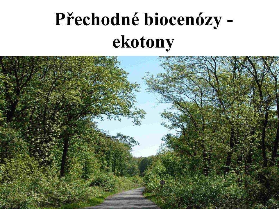 Přechodné biocenózy - ekotony