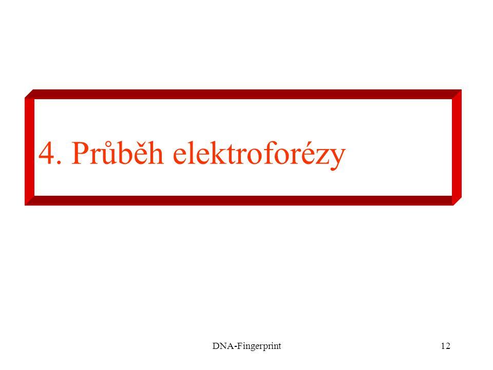 DNA-Fingerprint12 4. Průběh elektroforézy