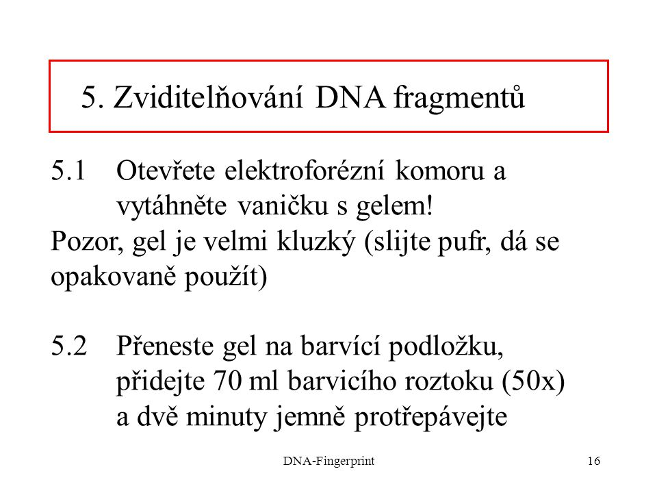 DNA-Fingerprint16 5.