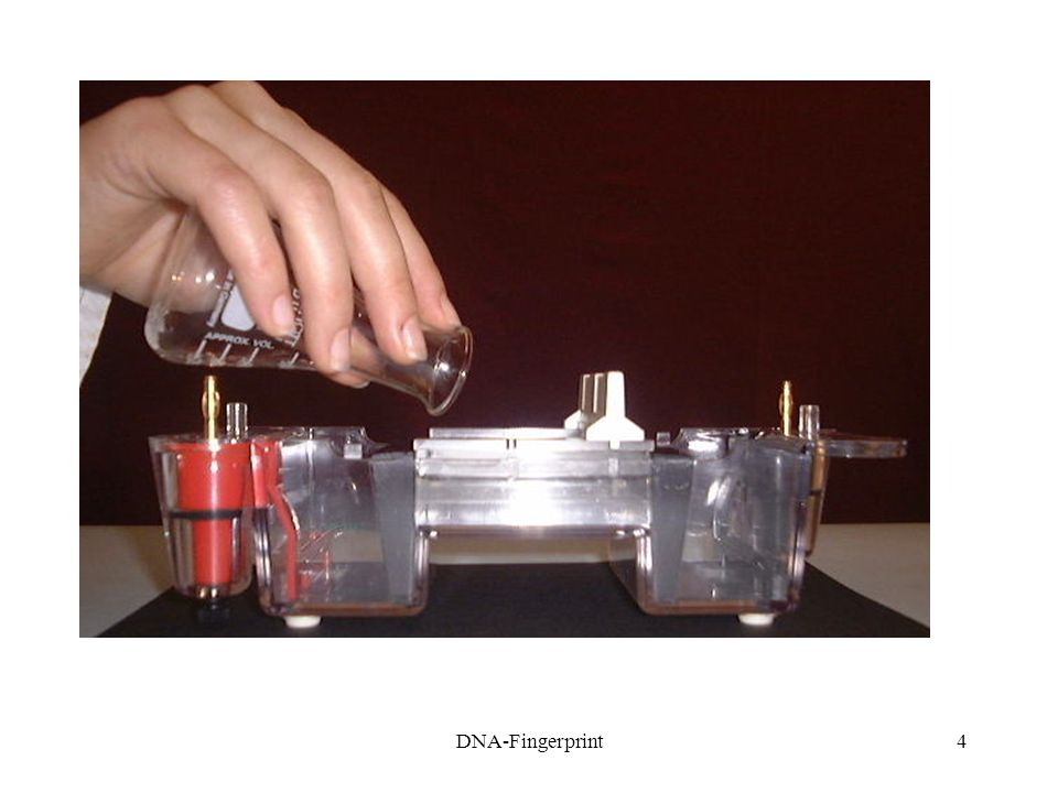 5 1.4Poté, co gel ztuhne, odstraňte kovové plíšky z gelové vaničky 1.5Přilijte 270 ml TAE-pufru, abyste pokryli celý gel 1.6Vyjměte hřebínek 1.